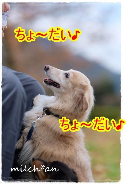 b0115642_16125301.jpg