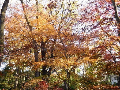 下鴨神社の紅葉  2017年12月2日_a0164068_10290531.jpg