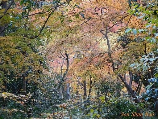 下鴨神社の紅葉  2017年12月2日_a0164068_10290616.jpg
