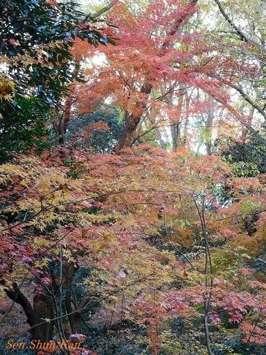 下鴨神社の紅葉  2017年12月2日_a0164068_10290681.jpg