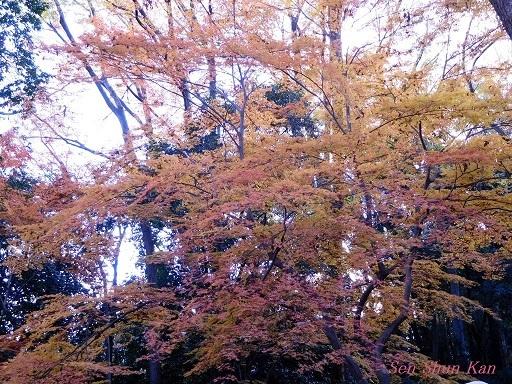 下鴨神社の紅葉  2017年12月2日_a0164068_10290689.jpg