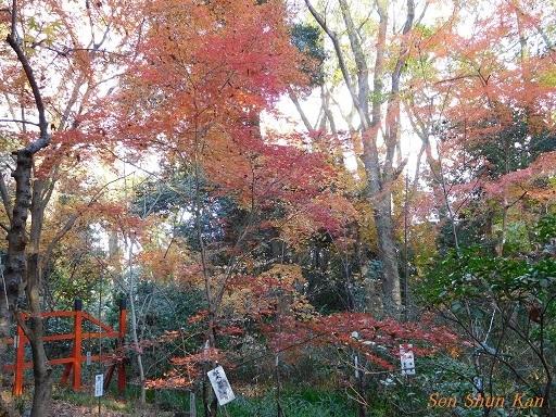 下鴨神社の紅葉  2017年12月2日_a0164068_10290705.jpg
