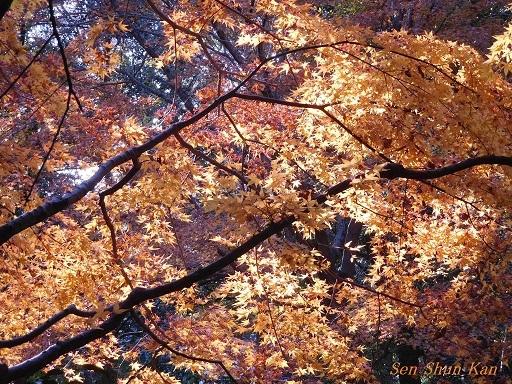 下鴨神社の紅葉  2017年12月2日_a0164068_10290733.jpg