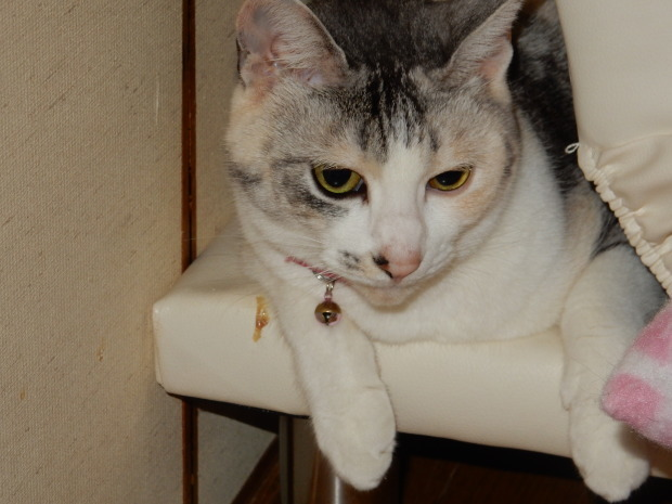 猫ハーレムと最後の紅葉?_e0355177_14372910.jpg