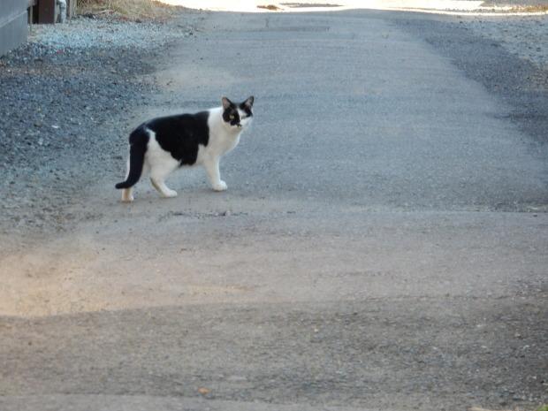猫ハーレムと最後の紅葉?_e0355177_14491617.jpg