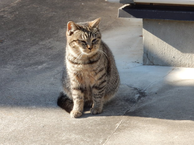 猫ハーレムと最後の紅葉?_e0355177_14505532.jpg