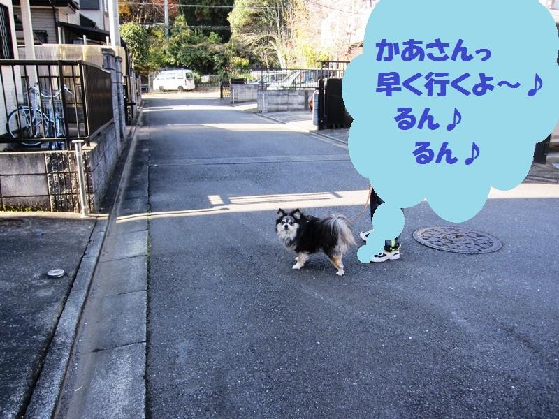 b0150088_168896.jpg