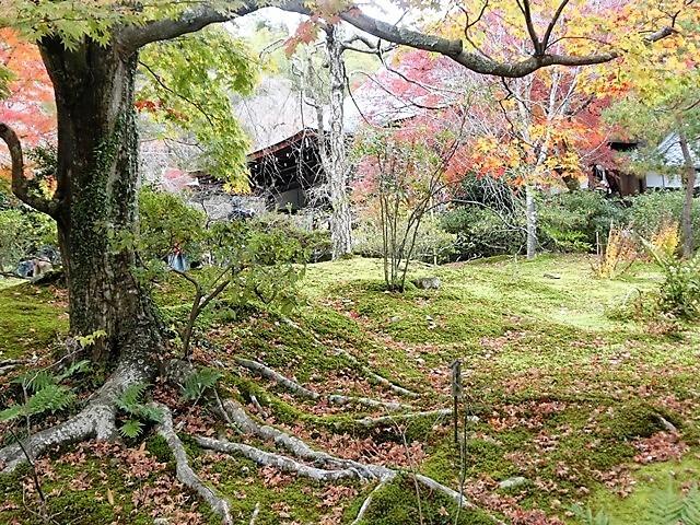 藤田八束の鉄道写真@京都の秋・・・天龍寺を訪ねて、冠雪した青森の霊峰岩木山_d0181492_08303803.jpg