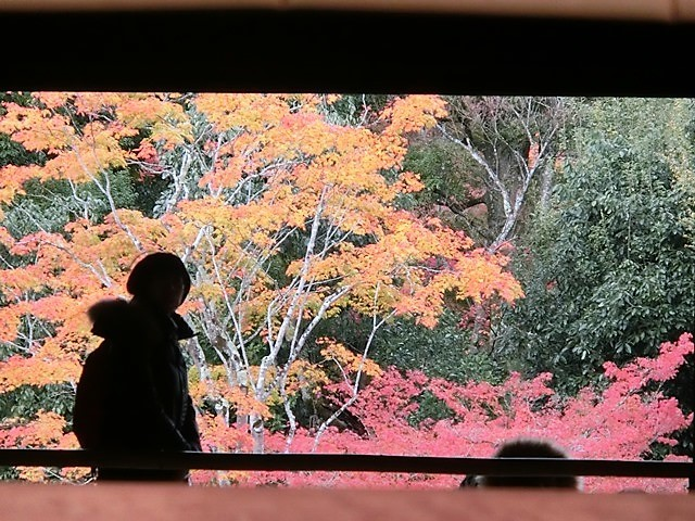 藤田八束の鉄道写真@藤田八束が最近撮った写真をご紹介・・・京都、鹿児島、宮崎、そして北海道_d0181492_08375467.jpg