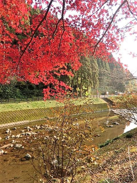 藤田八束の鉄道写真@藤田八束が最近撮った写真をご紹介・・・京都、鹿児島、宮崎、そして北海道_d0181492_17290508.jpg
