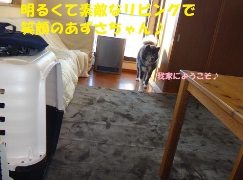 f0121712_13171609.jpg