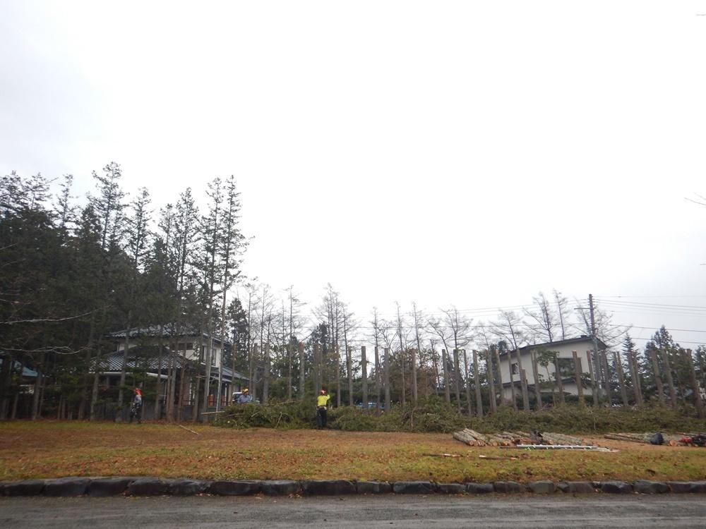 本日も樹木の切り詰め作業_c0111229_20574167.jpg