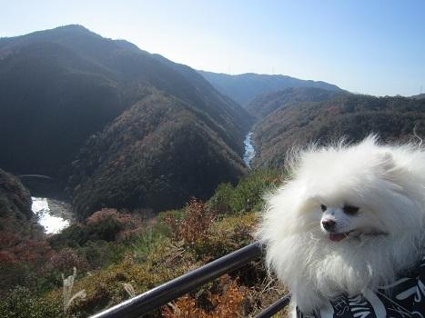 今年も行ってきました嵐山~♪_b0177436_09164018.jpg
