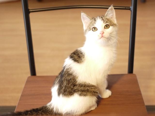 猫のお留守番 銀しゃもくん編。_a0143140_22095360.jpg