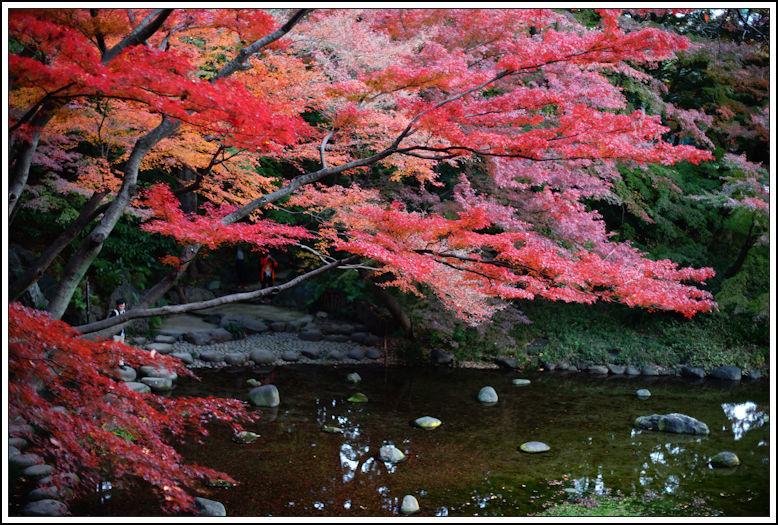 小石川後楽園 -20_b0340572_20493963.jpg