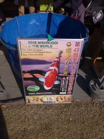 観賞魚シリーズ  『錦鯉の祭典』_b0011584_10172224.jpg