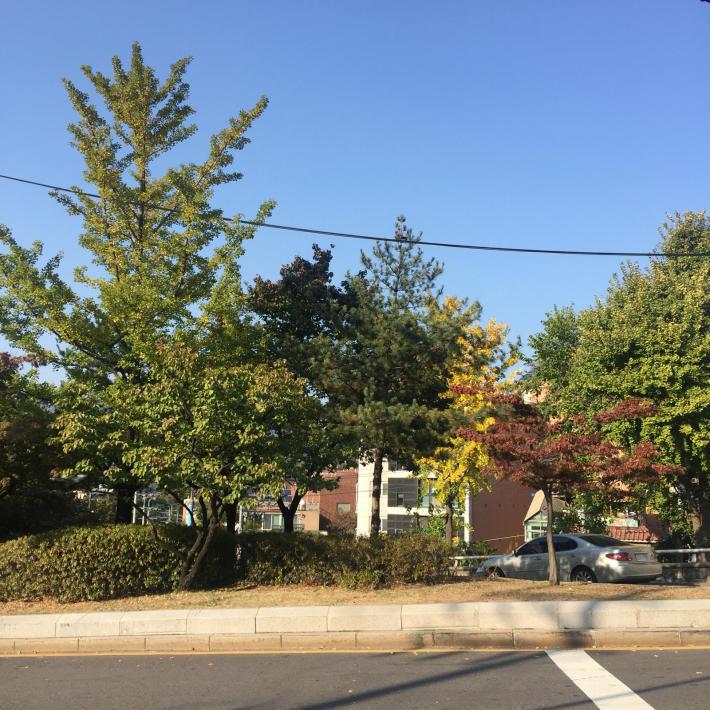 17年10月日帰りソウル 7☆秋のプビンはイモ&カボチャ_d0285416_19311879.jpg