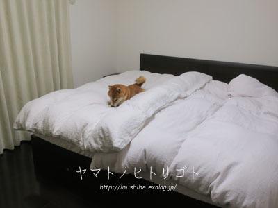 寝室の許可出しました。 : yamatoのひとりごと