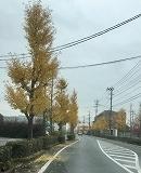 ひめちゃん_a0201257_16164112.jpg