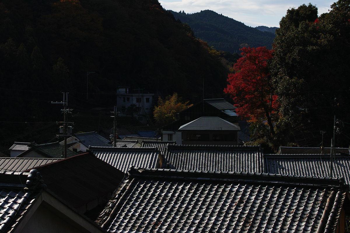 紅葉  2017  長谷寺_f0021869_00032772.jpg