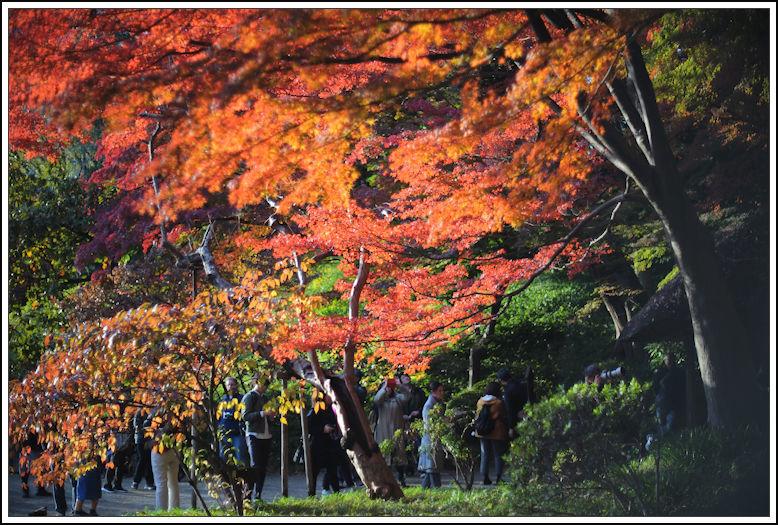 小石川後楽園 -21_b0340572_18280169.jpg