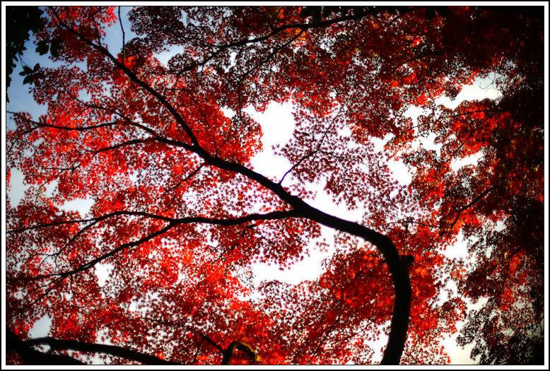 小石川後楽園 -21_b0340572_18280949.jpg