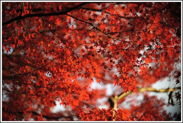 小石川後楽園 -21_b0340572_18282003.jpg