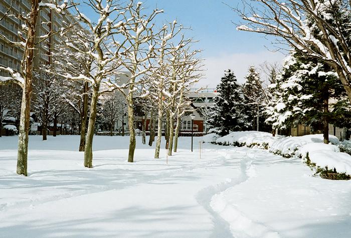 雪が本降りです_c0182775_16523791.jpg