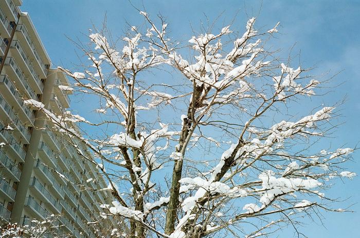 雪が本降りです_c0182775_16593548.jpg