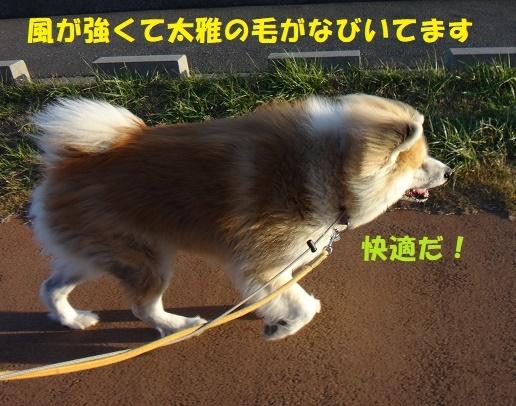 f0121712_00032459.jpg
