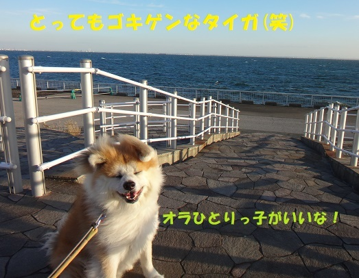 f0121712_00073210.jpg