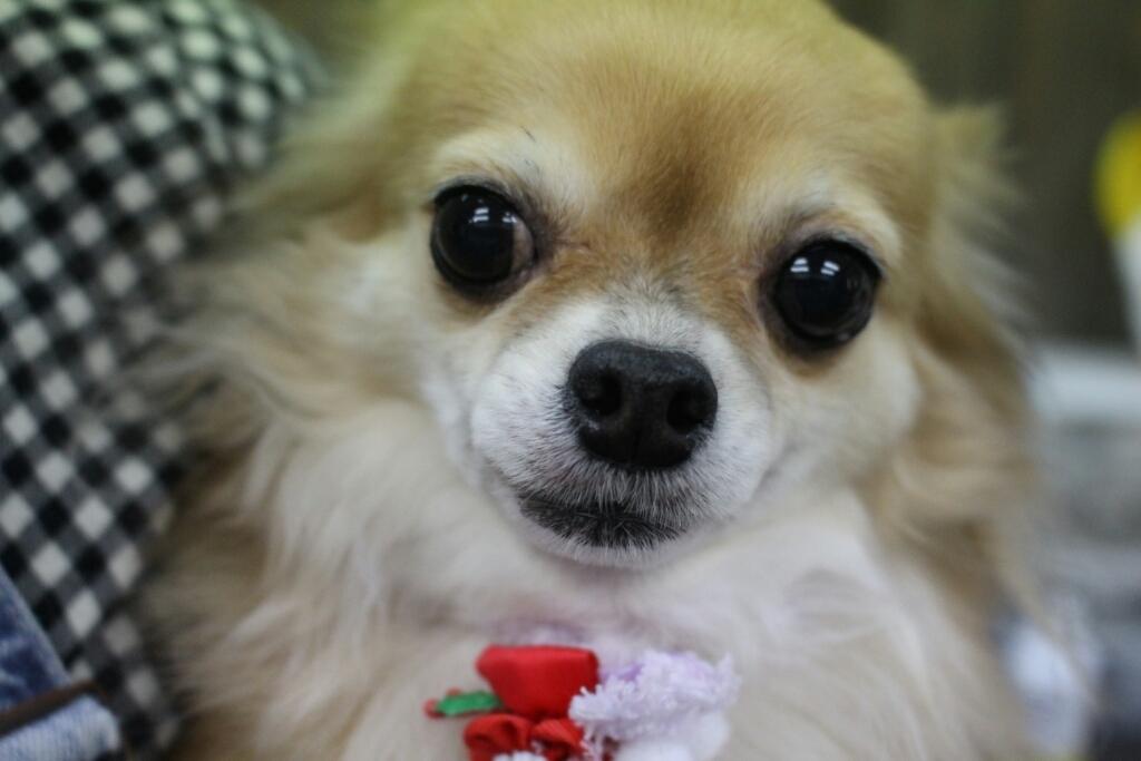 12月1日ご来店のわんちゃんです!!_b0130018_06492554.jpg