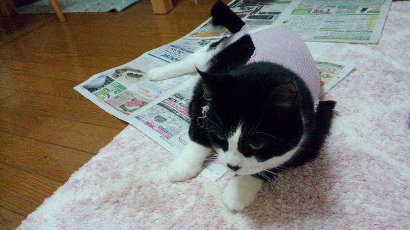 本猫、退院_e0101819_19005831.jpg