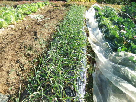野菜の大収穫_b0137932_18214424.jpg