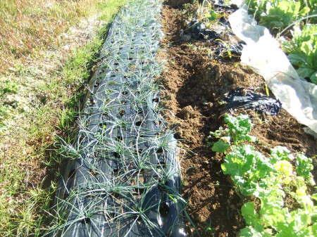 野菜の大収穫_b0137932_18233387.jpg
