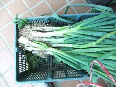 野菜の大収穫_b0137932_18272204.jpg