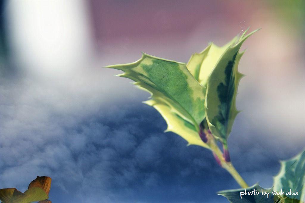 庭の花を多重露光撮影で(^^♪_e0052135_22181880.jpg