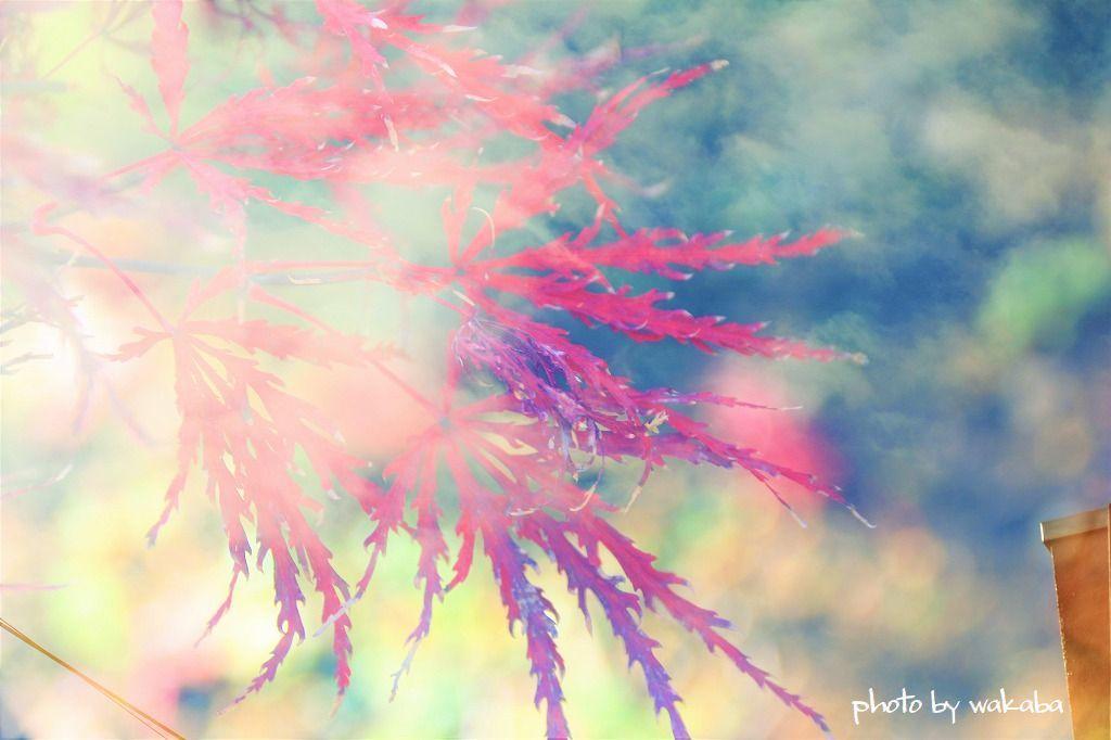 庭の花を多重露光撮影で(^^♪_e0052135_22182159.jpg