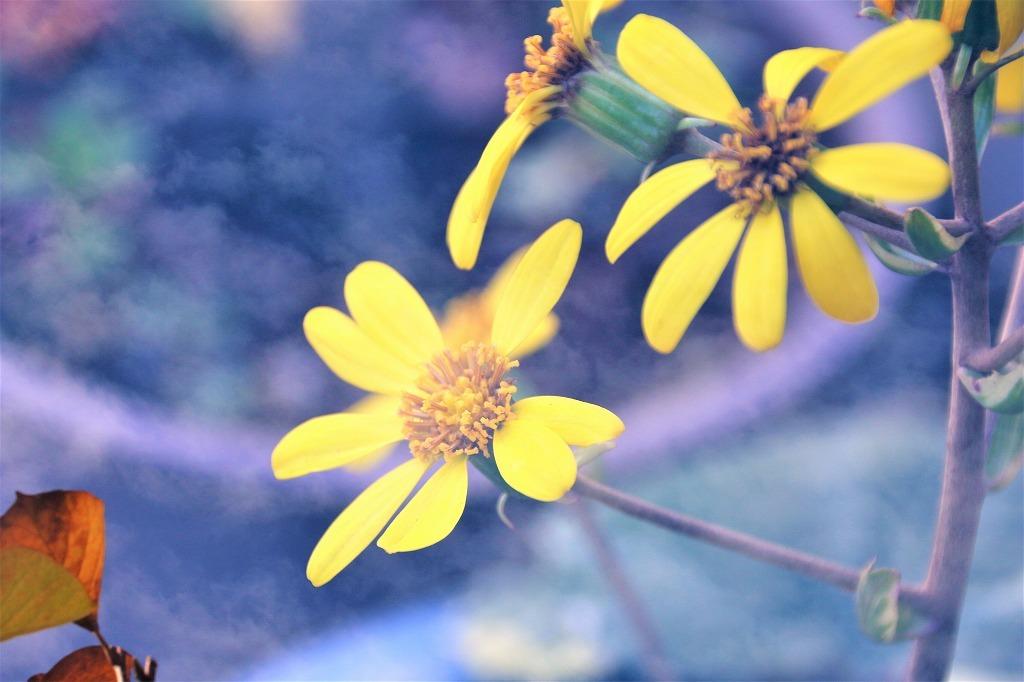 庭の花を多重露光撮影で(^^♪_e0052135_22182513.jpg
