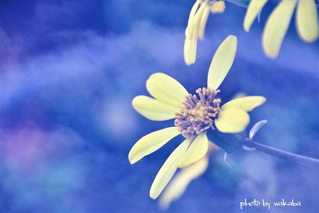 庭の花を多重露光撮影で(^^♪_e0052135_22182921.jpg