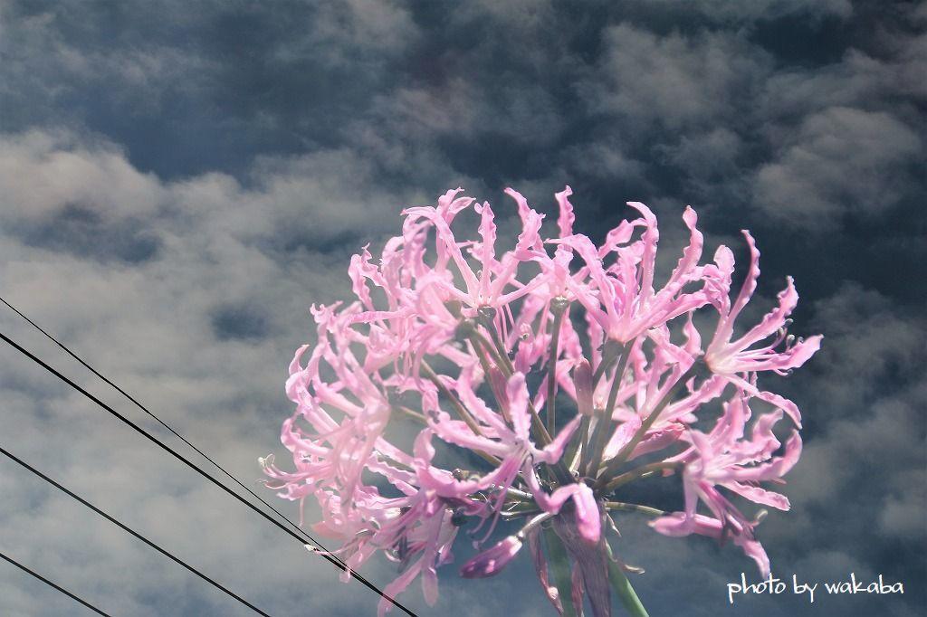 庭の花を多重露光撮影で(^^♪_e0052135_22183517.jpg