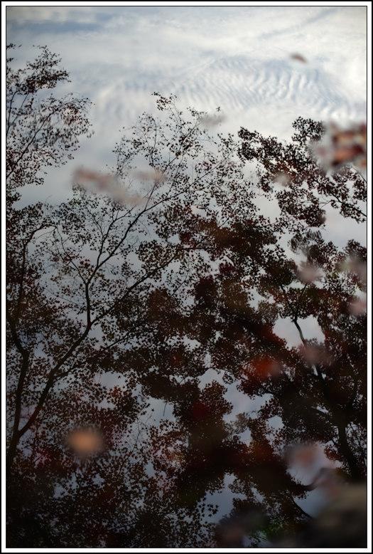 小石川後楽園 -22_b0340572_21063256.jpg