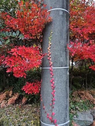紅葉眺めながらの・・鉢の木・阿佐ヶ谷本店の最中。_f0177373_19254522.jpg