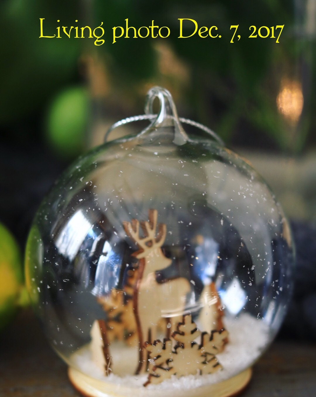 living photo 教室 7,December,2017_c0366722_17410577.jpeg