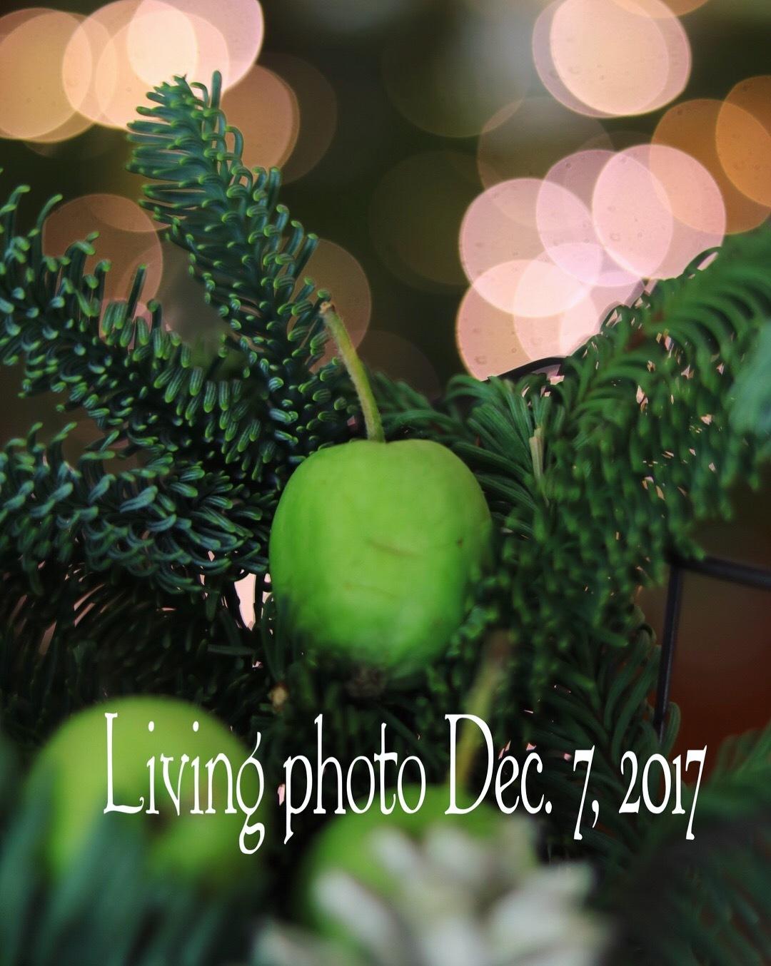 living photo 教室 7,December,2017_c0366722_17414048.jpeg