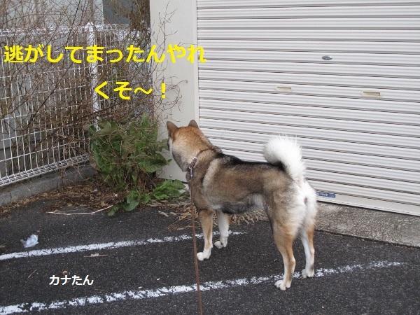 f0143123_09205660.jpg