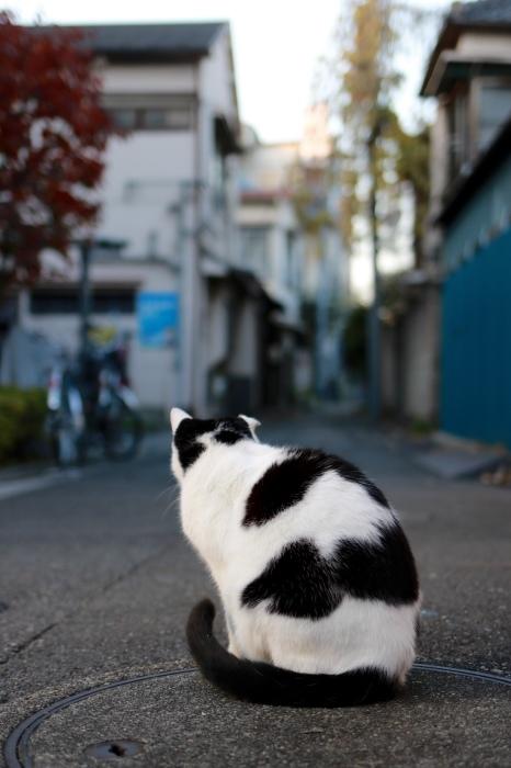 谷根千散歩 part 3_f0348831_22220081.jpg