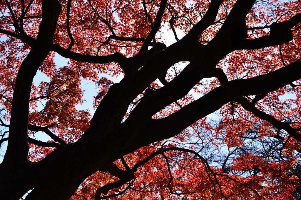 小石川植物園 紅葉撮影ワークショップ_f0050534_22343124.jpg