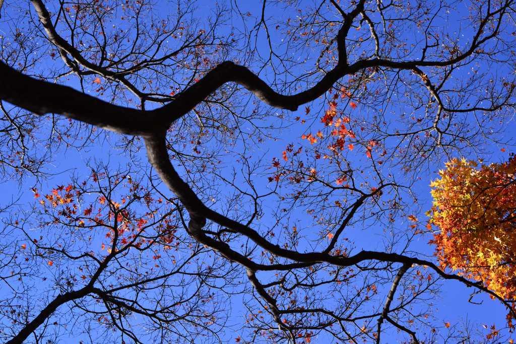 小石川植物園 紅葉撮影ワークショップ_f0050534_22343157.jpg