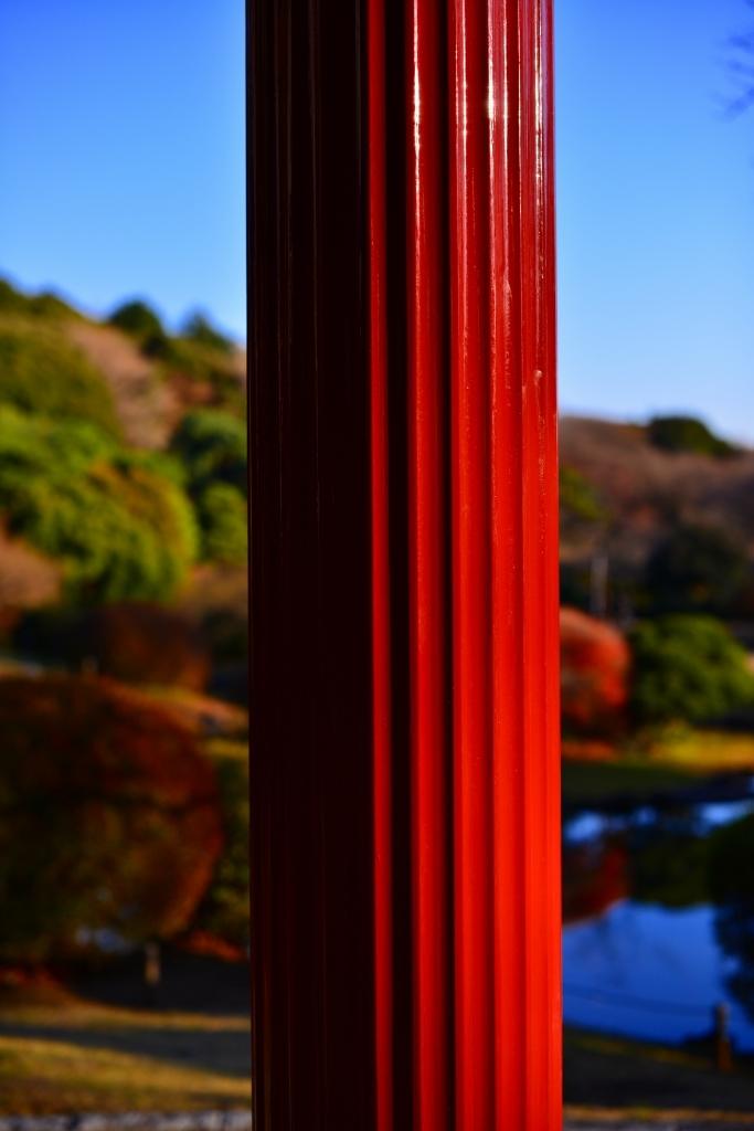 小石川植物園 紅葉撮影ワークショップ_f0050534_22343202.jpg